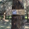 Barred Owl Nest in Lavender Farm