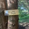 Bald Eagle Nest in Lavender Farm