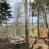 Hussey Mtn. Tree Farm (Ledgewood)