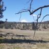 Carbon Farm Oak Savannah Camp