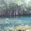 Wild and Wonderful Manatee Springs