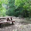 Woodland Glade Dry Camping Paradise