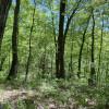 Meadows Edge Site 1