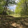 Serene Blueberry Grove