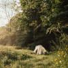 Forest Farm Homestead Sanctuary