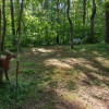 Wooded trails site 1