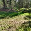 Pond  Site 3