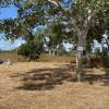 Cabbage Gum Camp site 5