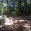 Redwood Forest Raven Haven 1