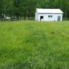 Homestead back field.
