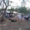 Butcher Bird Bush Camp