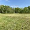 Empty Field: A Few Trees