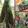 Maaramaka Campsite & Cultural Tours