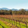 Vineyard, Stirling Range Views