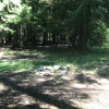 Painted Cedar Site