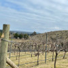 Gardens, Wineries and Kangaroos