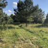 Meadow Tent Sites Drive-up