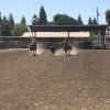 McGrady Livestock Roping Arena