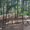 Forest & lawn tent sites