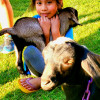 Bear Wallow Farm & Baby Goat Yoga