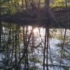 Pine Grove Campsite: BlackMapleFarm
