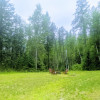 Meadow and Trees in Whitefish