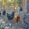 Bella's Mini-Farm