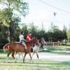 Mini farm family getaway