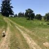 Celestine Field & Oak Grove