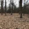 Paw Paw Forest