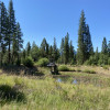 Forested Camp Site With Pond