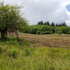 Elk Meadows - In The Field