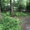 Safe Haven in Private Woods