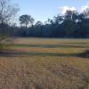 Grass Field with Bush Surrounding