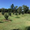 Green Grass Camp