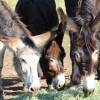 Long Ears Farm & Art (CLOSED)