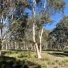 White Gum Forest Retreat