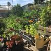 Leafy Garden Outlook