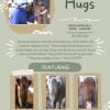 Highland Hugs Cow Camping