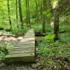 Creekside Tent Platform- Owl