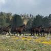 Wild Horse Meadow