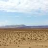 Harvest Trail: 5 Acre Desert Wonder