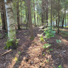 Forest with Trails -Lots of Privacy