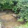 Creekside Bliss Level Camper Site
