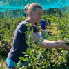 Farmstay With U-PIck Blueberries