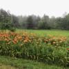 Serene Brookside Farm Campsite