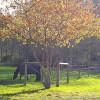 County Line Farm