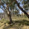 Wombat Valley