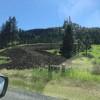 Quiet Green Hills