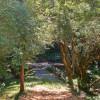 Bellingham Farm - Forest Tent Site